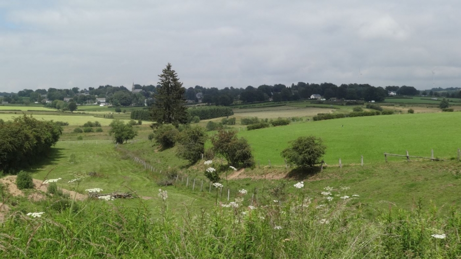 Uitzicht nabij Honsfeld