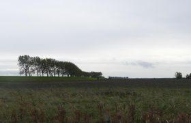 Grasdijken
