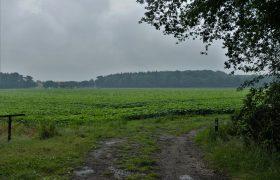 Wouwse Plantage